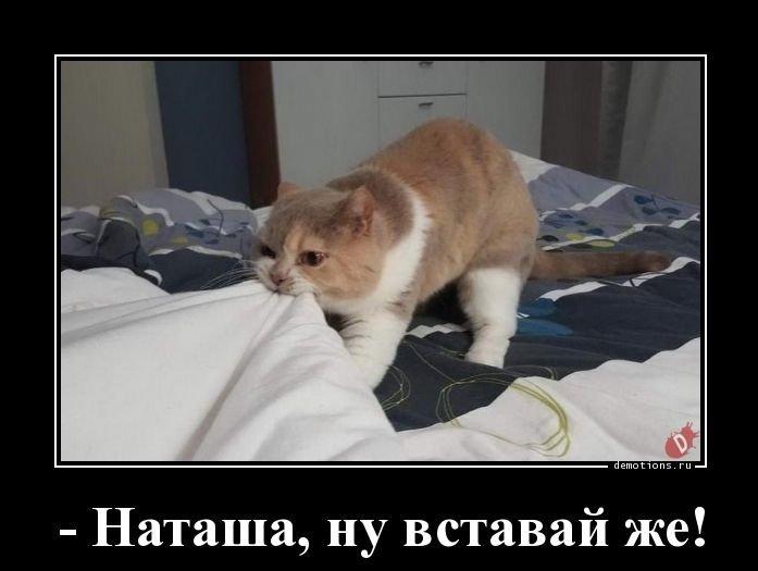 verbi di posizione russo